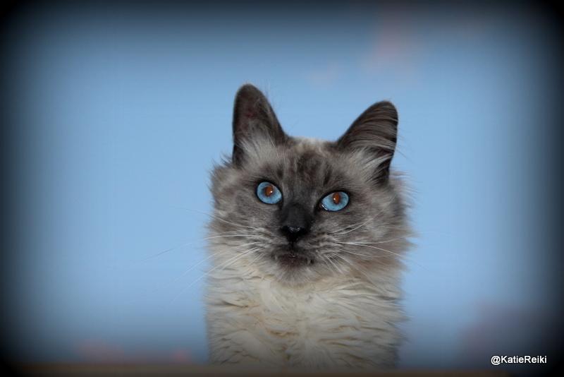 Eyes as Blue as the Sky
