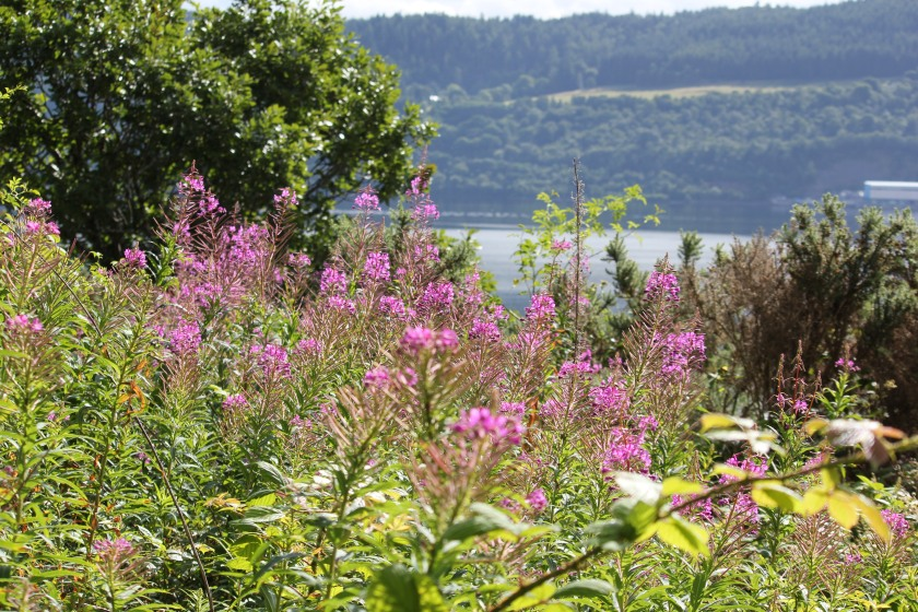 A view through the street side wildflowers to Loch Ness