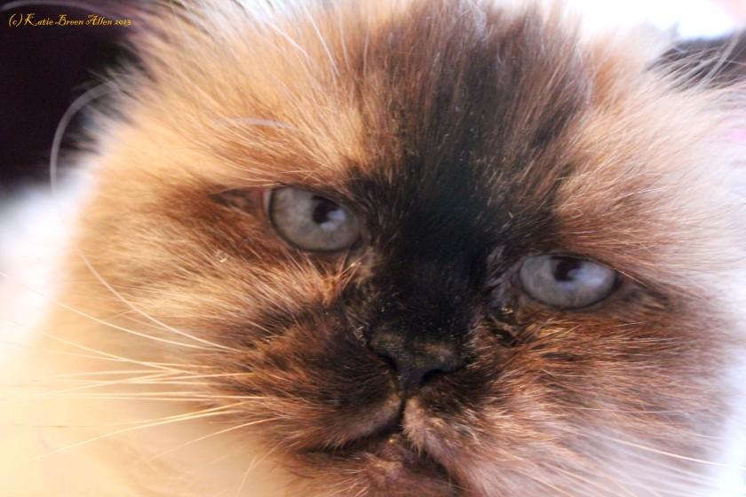 Thelma's Closeup
