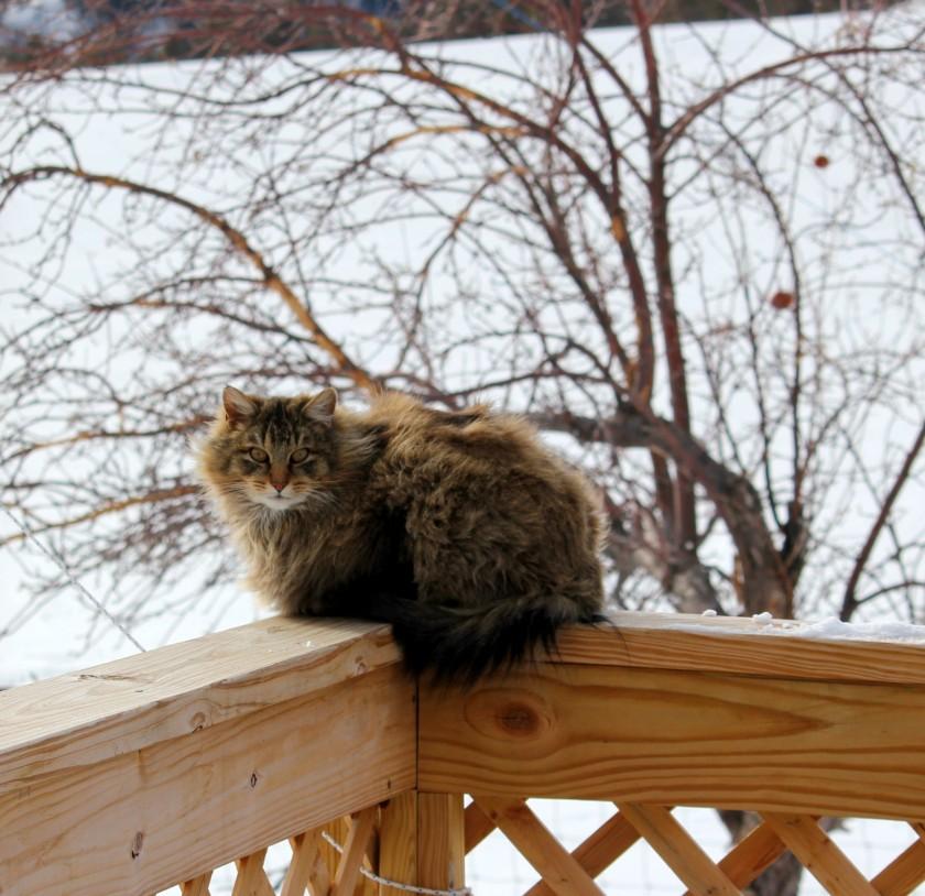 Indoor vs Outdoor Kitties