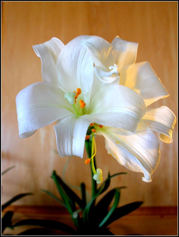 Cee - Flower 2