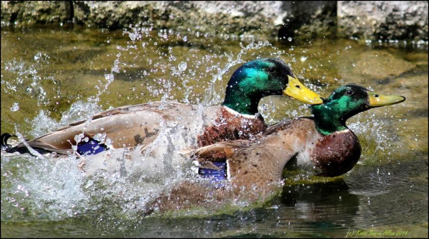 Cee's Fun Foto Challenge: Water