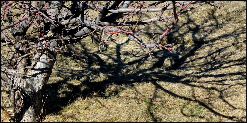Play with shadows and tree